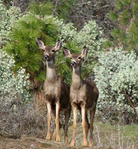 deerwatch