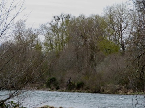 touvelle-heronry1