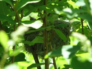 yewa nest