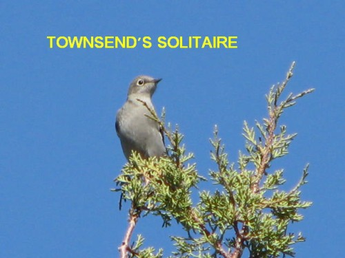 TONWSEND'S SOLITAIRE
