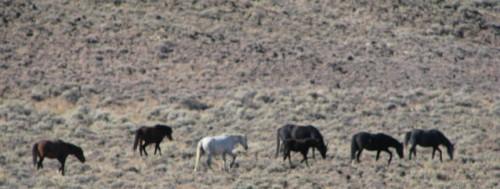 wild horses slim