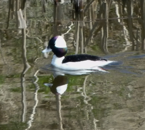 buff in canal