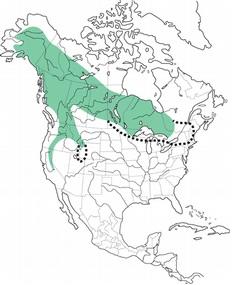 ggo map-1