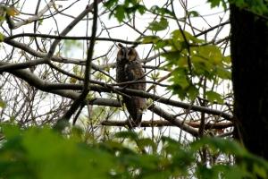 leowl--steve brown