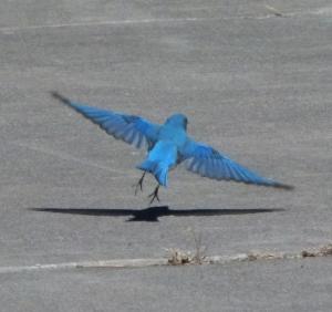 mtn landing