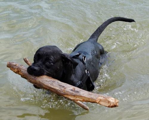 HAPPY DOG (1280x1035)