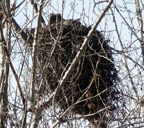 gho-nest1