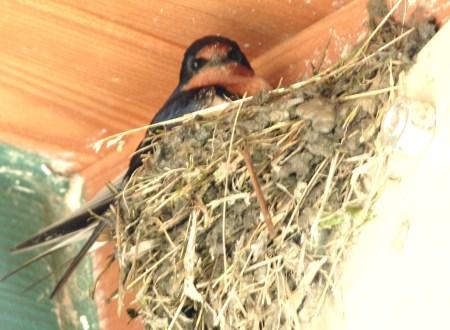 bars nest
