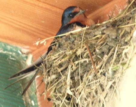 bars-nest2
