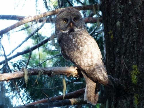 ggo full owl (1280x960)