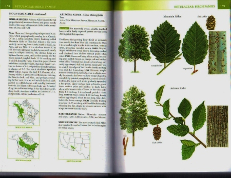 tree book page