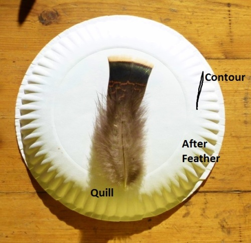 FEATHER PARTS