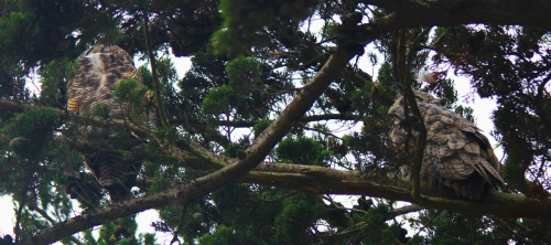 GHO IN TREE (1280x569)