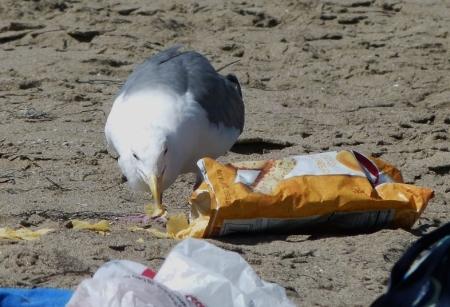 gull chips5