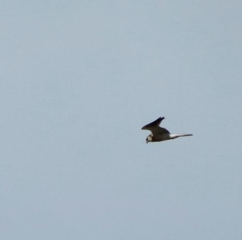 kite passes