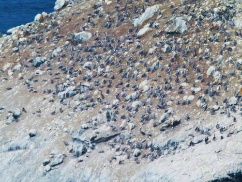 pelican slope