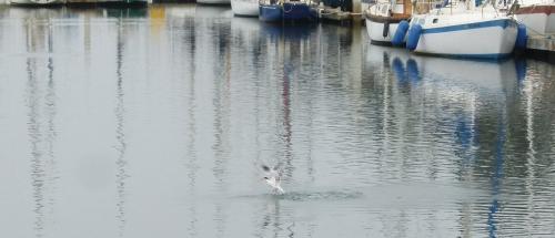 tern emerge 3