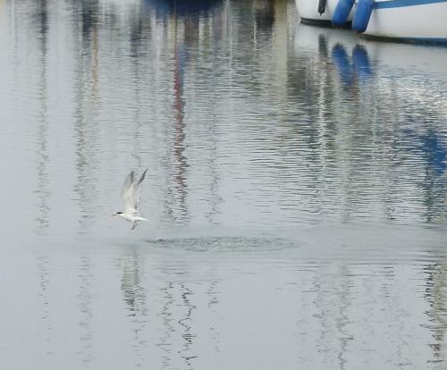 tern emerge 4