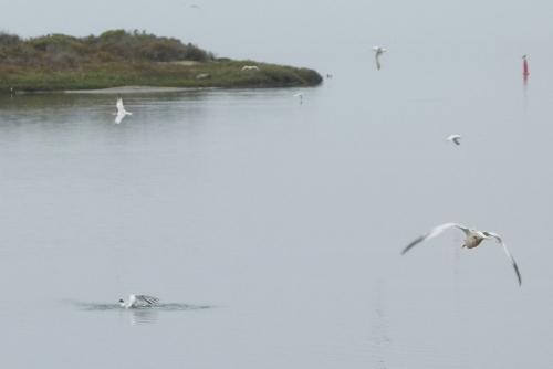 tern emerge 7