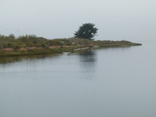 tern flock1