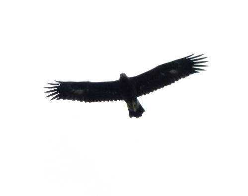 eagl profile1