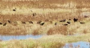 ibis line (1280x685)