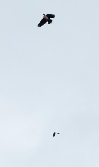 LEWO-AIR1 (1280x960)