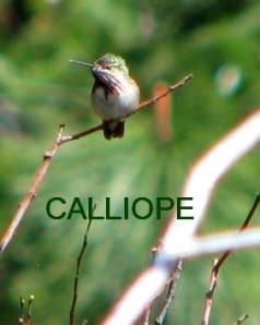 CALLIOPE 5-12