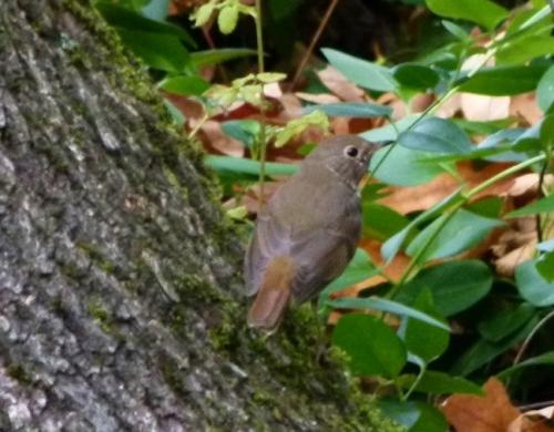 HERM ON TREE (1280x960)