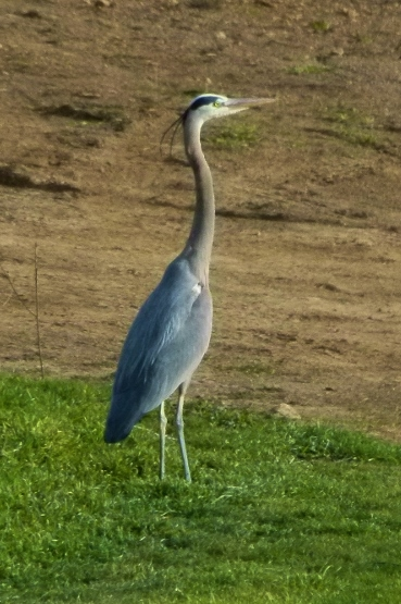 GBH STANDS UP