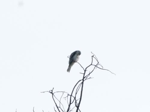 kite yng 4 (1280x960)