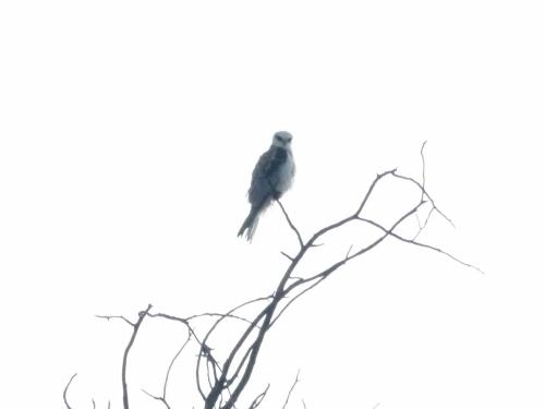 kite yng 5 (1280x960)