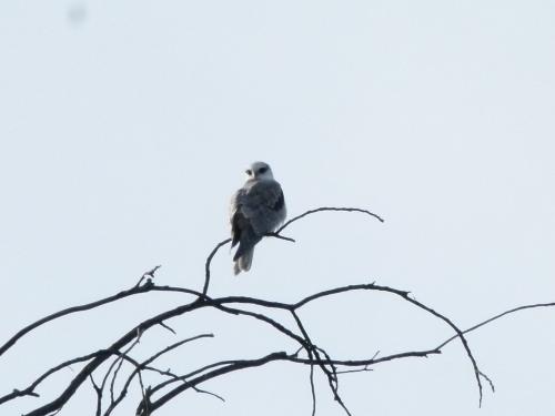 kite yng back (1280x960)