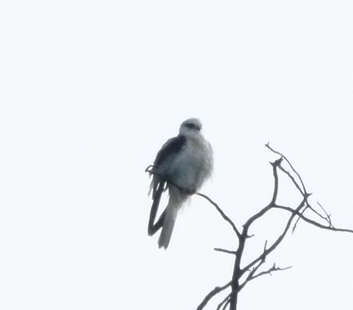 kite-yng1 (1280x960)