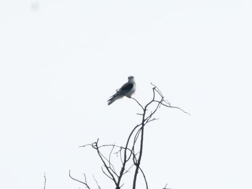 kite-yng2 (1280x960)