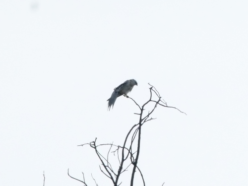 kite-yng3 (1280x960)