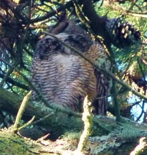 OWL-BIGG (1280x960)