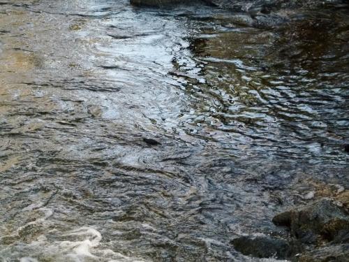 dppr swim (1280x960)