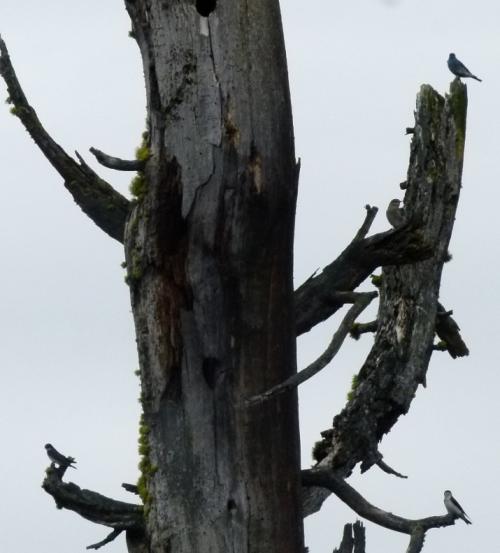 NEST TREE