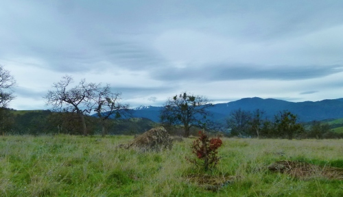 OAKS AND mt.a