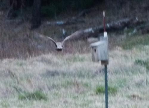 OWL FLY3