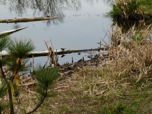 sosp at pond (1280x960)