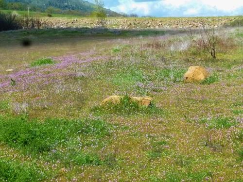 filaree field