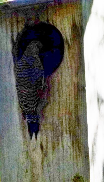 nfol at owl