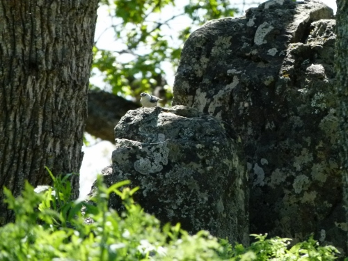 rokhatch1 (1280x960)