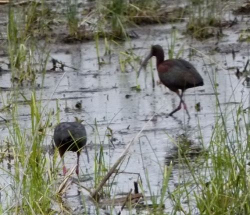 ibis wlkz (1280x960)