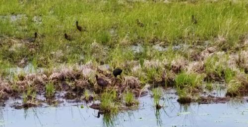 ibiswamp1 (1280x960)