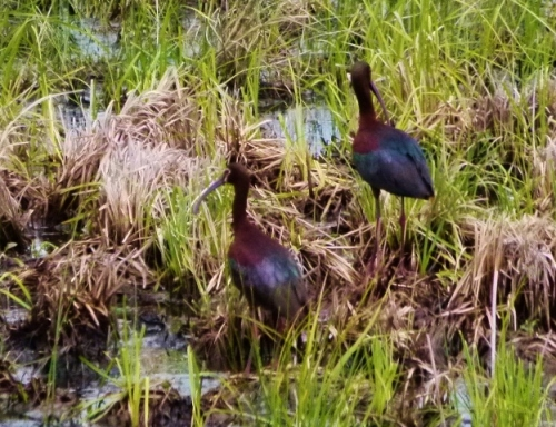ibiswamp2 (1280x960)