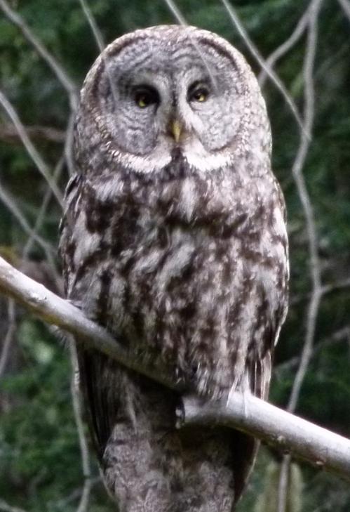 MOM OWL2 (1280x960)