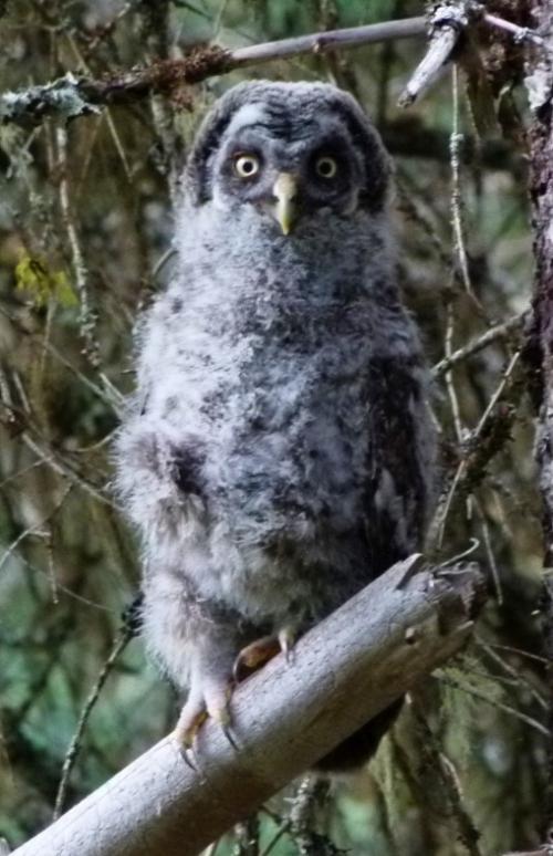 owlet-one (1280x960)